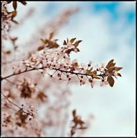 spring I by quadratiges