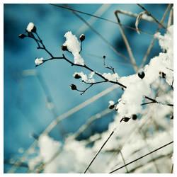 l'hiver en bleu I by quadratiges