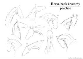 Horse Neck  anatomy practice  by HorRaw-X