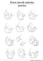 Horse muzzle |anatomy practice| by HorRaw-X