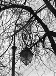 La lumiere dans les arbres by LE-Taka