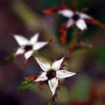 Organic Stars by Matthileo
