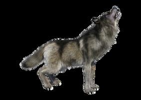 Wolf by HZ-Designs