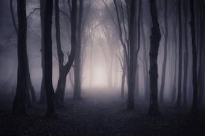 Dark Forest by HZ-Designs