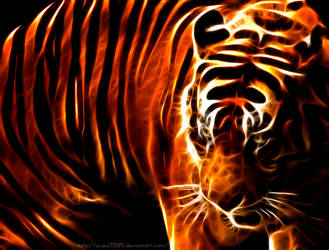Tiger by zuza7595