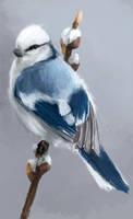 Blue Bird by Fievy