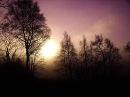Purple Haze by insp88