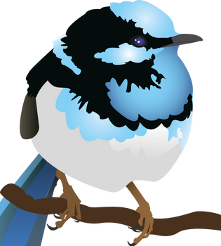 Blue Wren by Metamorphosing