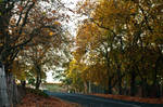 Autumn Colours by Metamorphosing