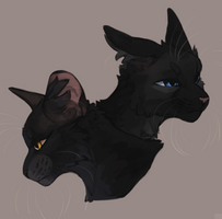 Nightcloud and Crowfeather by GrayPillow