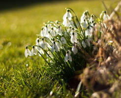Spring's Coming by BWozniakPhotography