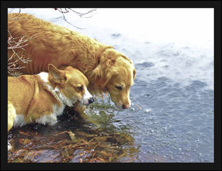 Dogs of Winter by Styrmwolf