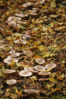 Mushroom Stock by Theshelfs