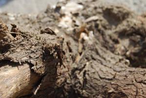 TREE BARK STOCK 9 by Theshelfs
