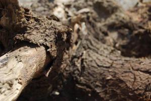 TREE BARK STOCK 8 by Theshelfs