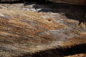 TREE BARK STOCK 10 by Theshelfs