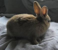Rabbit Babies by Theshelfs