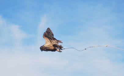 OWL IN FLIGHT STOCK by Theshelfs