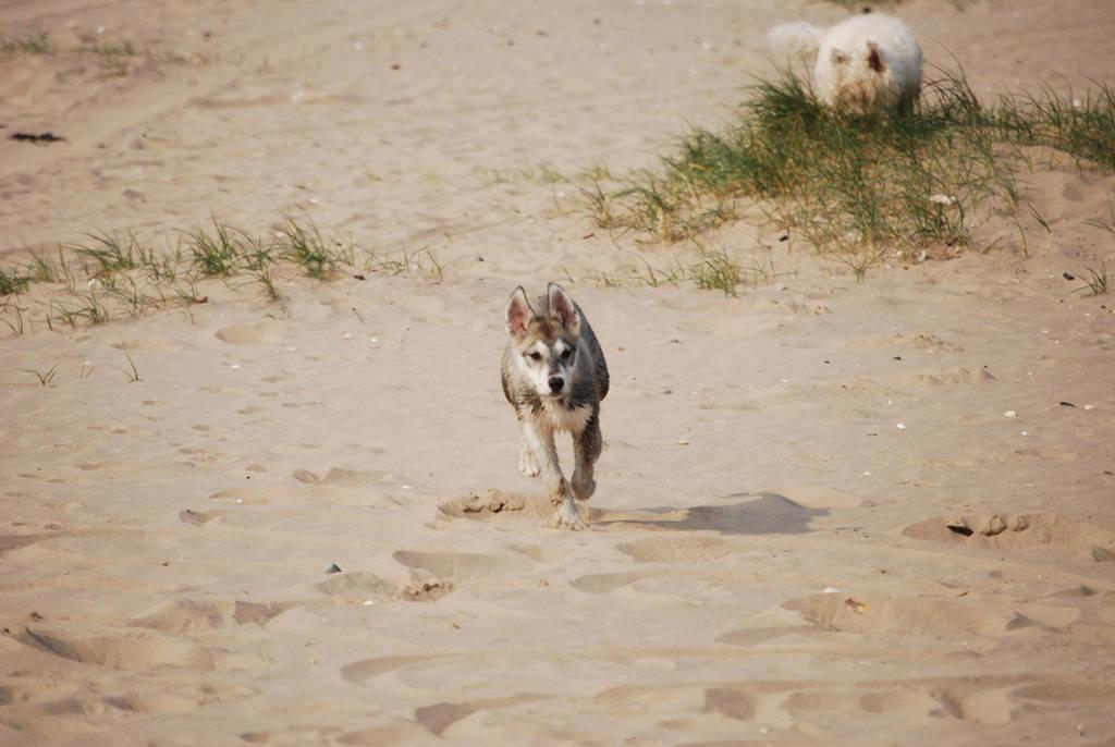 Wolf Pup STOCK by Theshelfs