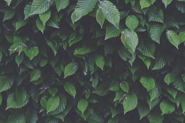 darken green by Prolite