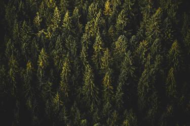 Tree Wonderland by Prolite