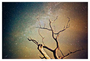 An old tree by garrit