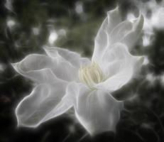 Fantasy FX Flower Stock 4 by Moonchilde-Stock