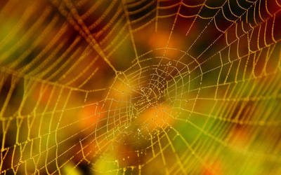 Halloween Spider Web Stock by Moonchilde-Stock