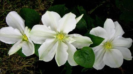 June Flowers II Stock by Moonchilde-Stock