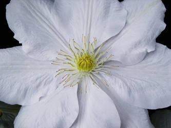 June Flowers III Stock by Moonchilde-Stock