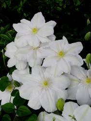 June Flowers IV Stock by Moonchilde-Stock