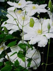 June Flowers VII Stock by Moonchilde-Stock