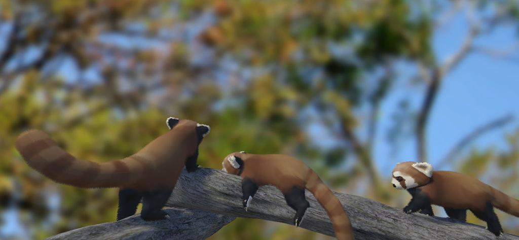 Red pandas hanging out in a tree #2 by eriknordeus