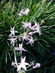 14 Purple Flowers by dainfort
