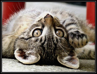 Hell-o by Hannadeva by cat-club-cat