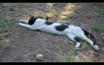 I'm The Tallest Cat by cat-club-cat