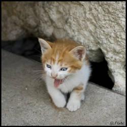 Meeeaaww by cat-club-cat