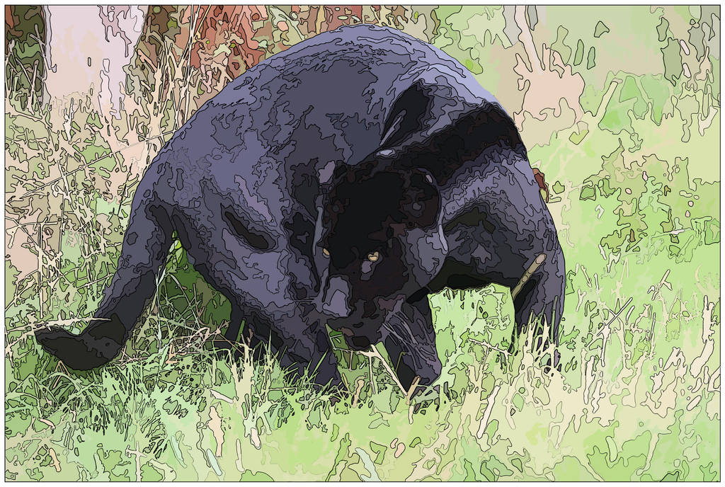 Panther by Loves2dive