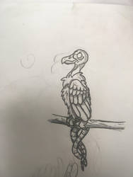 A lil vulture by the-sketchy-orca