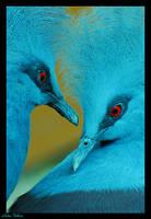 blue duet by Brazilero2002
