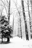 Winter forest by xnih1lo