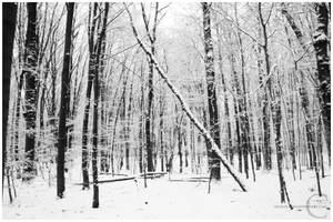 Winter forest II by xnih1lo