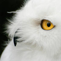 Hedwig by v4nity