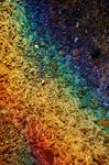 Rainbow. by pingufugu