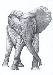 CATC - Pointillism Elephant by kaotickell