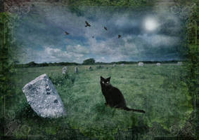 Cornish Black Cat by ArwensGrace