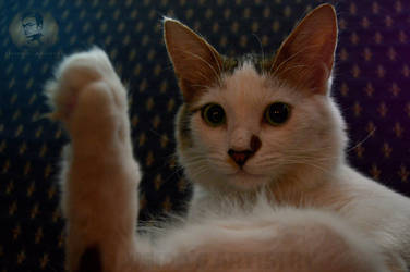 Karate Kitty by Usidd
