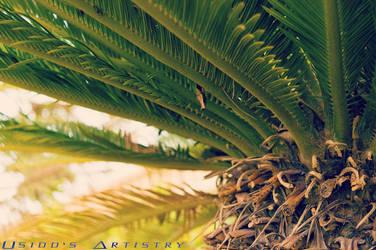Palm Tree Closeup by Usidd