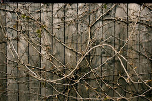 SS-0191 Wall Vines by Stocking-Stuffer