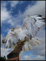 Eagle In Flight by valaMS